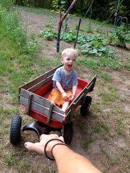 jasper wagon