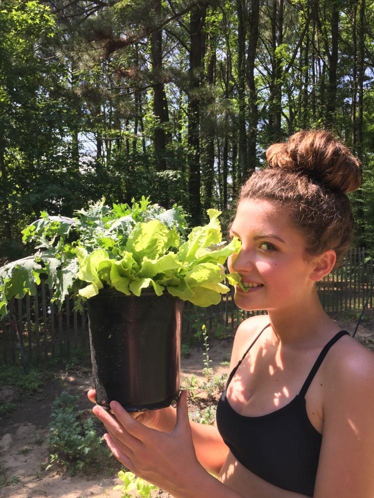 Teags lettuce