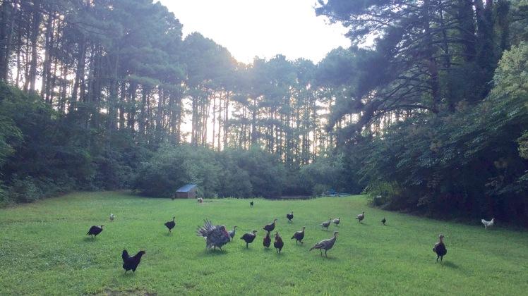 birds-roam